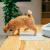ピダーン製の砂マット猫用トイレの砂マット、猫用マット、猫用砂防止マット、ペット用の砂丘を持ち込みます。